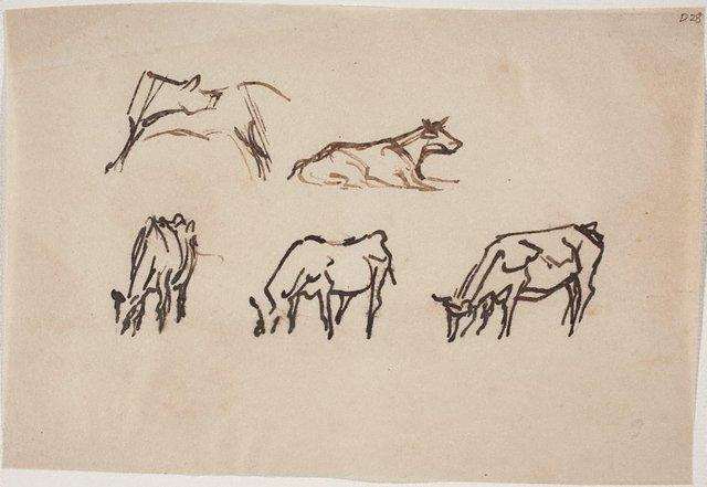 An image of Wangi cows
