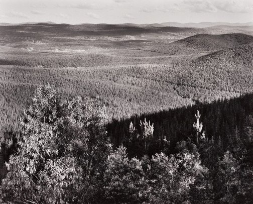 An image of Pine plantation II, Bondo State Forest by Peter Elliston