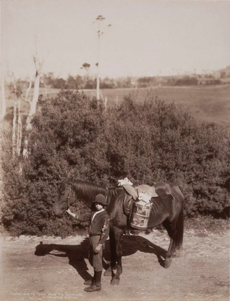 An image of Taking milk to town from the mountains Shoalhaven District by Unknown, NSW Government Printer