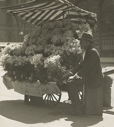 An image of Flannel flower stall by Harold Cazneaux