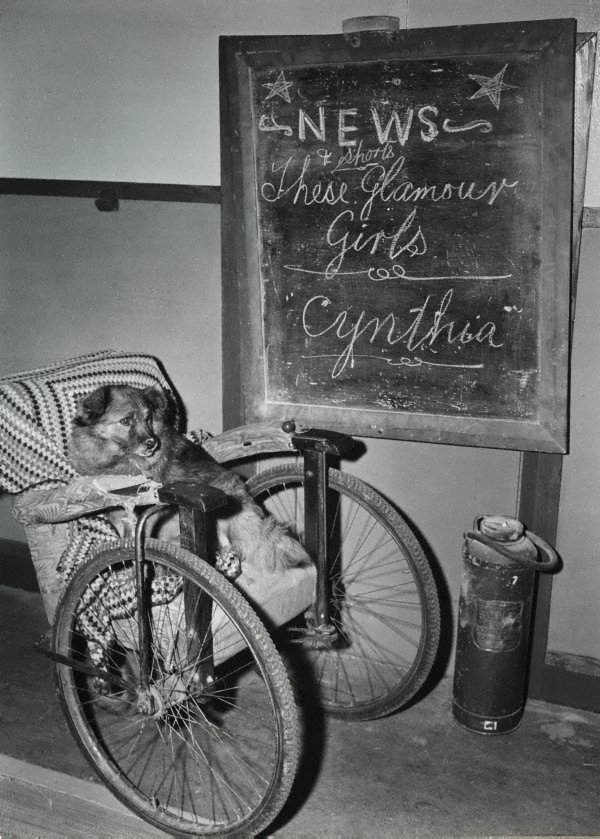An image of Untitled (dog and wheelchair)