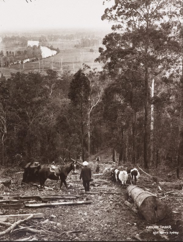An image of Hauling timber