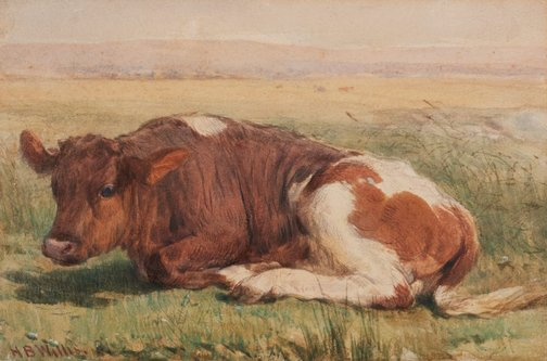 An image of Study of a calf by Henry Brittan Willis