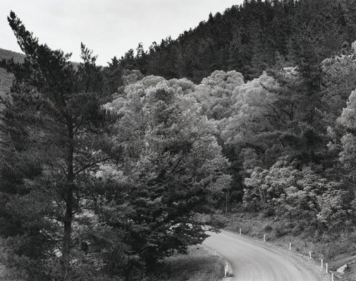 An image of Edge of pine plantation, Brindabella, Tumut Road by Peter Elliston