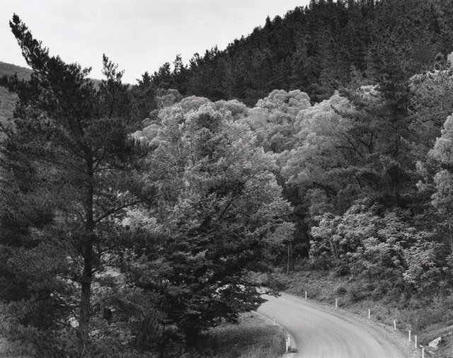 Edge of pine plantation, Brindabella, Tumut Road, (1983) by Peter Elliston