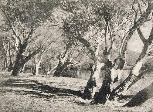 An image of Riverside near Albury by W.H. Moffitt