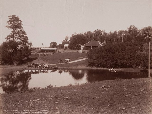 An image of Graham's farm, top of Berry Mountain Shoalhaven District