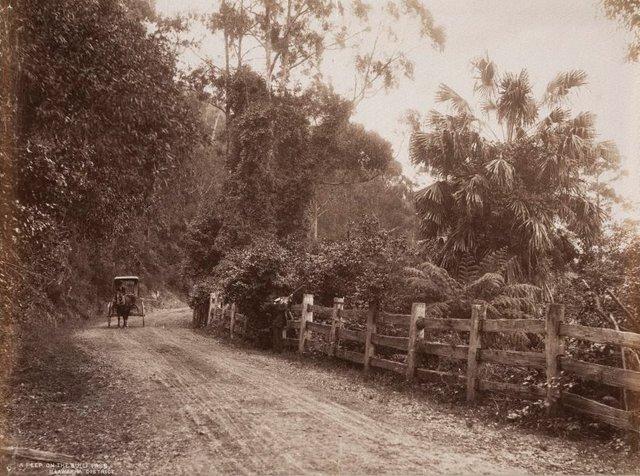 An image of A peep on the Bulli Pass, Illawarra District