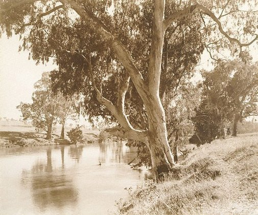 An image of Placid waters, Albury district by Harold Cazneaux