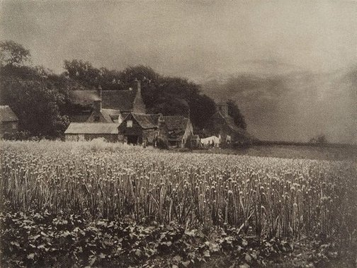 An image of The onion field 1890, from Camera Work, no 8, April 1907 by George Davison