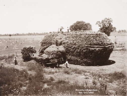 An image of Building a wheatstack by Unknown, Kerry & Co