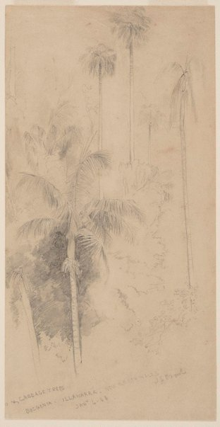 An image of Cabbage trees, Bulgonia, Illawarra, New South Wales by John Skinner Prout