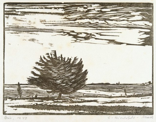 An image of Corio (Pine by the shore)