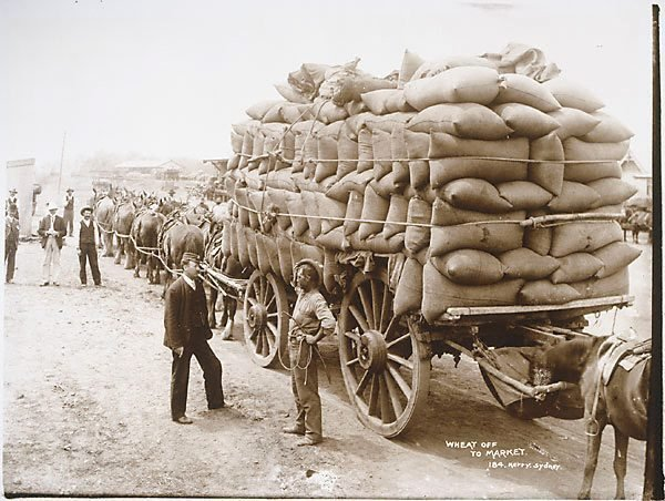 An image of Wheat off to market