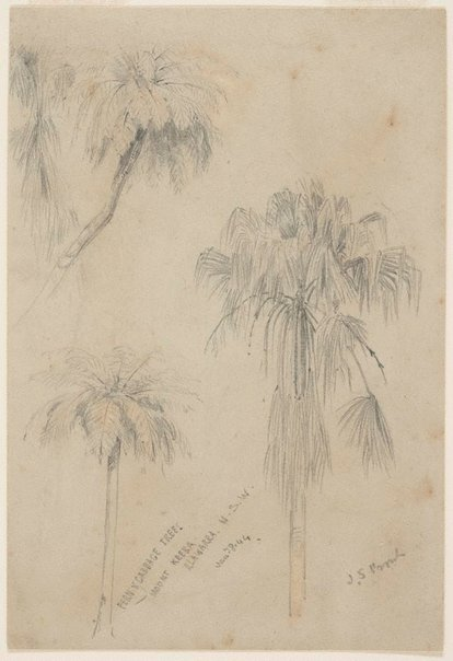 An image of Fern and Cabbage trees, Mount Keira, Illawarra, New South Wales by John Skinner Prout