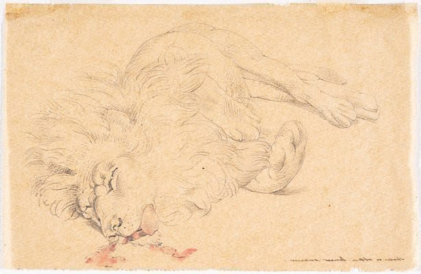 An image of Tracing of study of dead lion for 'David's first victory'
