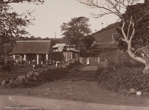 An image of A mountain dairy, Illawarra District by Unknown, NSW Government Printer