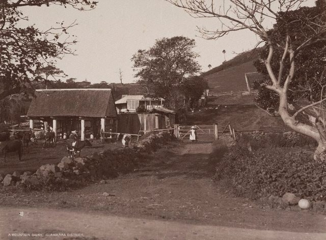 An image of A mountain dairy, Illawarra District
