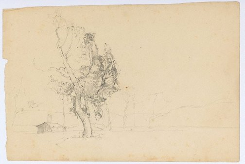 An image of (Tree study) by Sydney Long