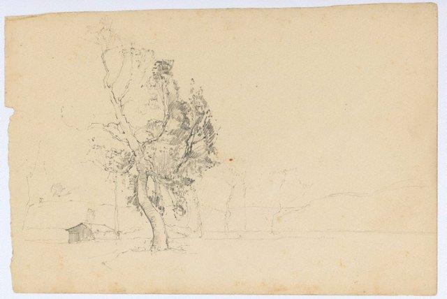 An image of (Tree study)