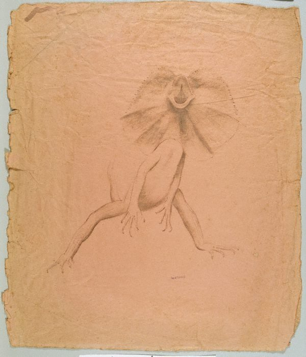 An image of Frilled lizard