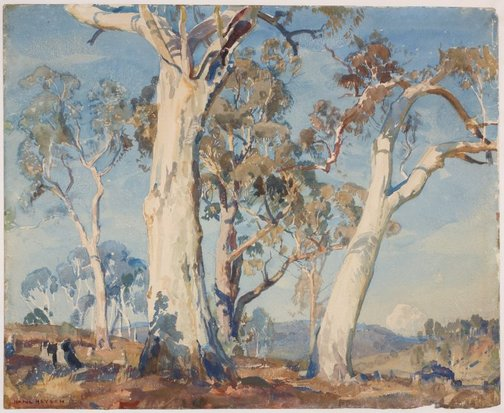 An image of The white gum by Hans Heysen
