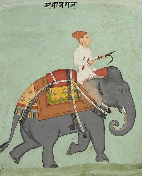 An image of Baggage Elephant by
