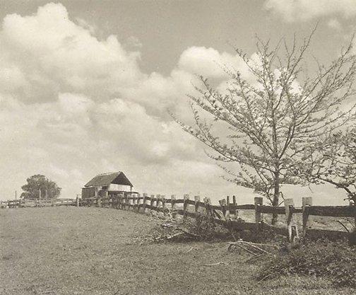 An image of Rural N.S.W. by Henri Mallard