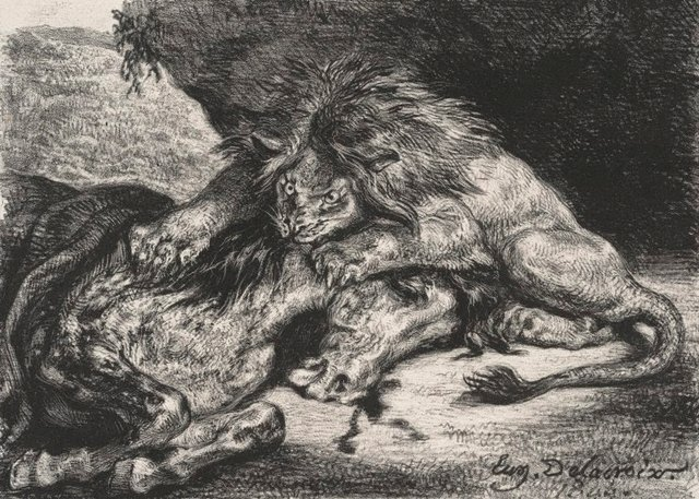 An image of Lion devouring a horse