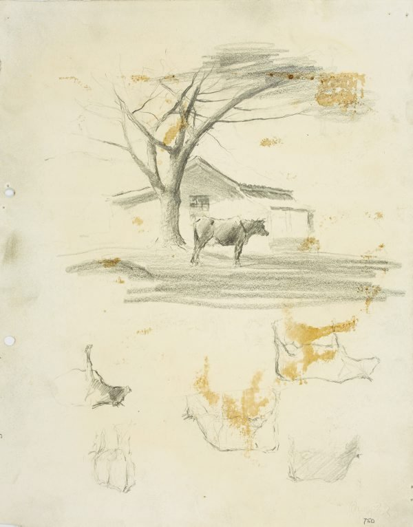 An image of recto: Farmhouse with cow under a tree, Parramatta and Cow studies verso: Cow studies