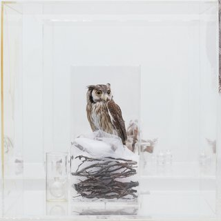 AGNSW collection Janet Laurence The memory of nature 2010