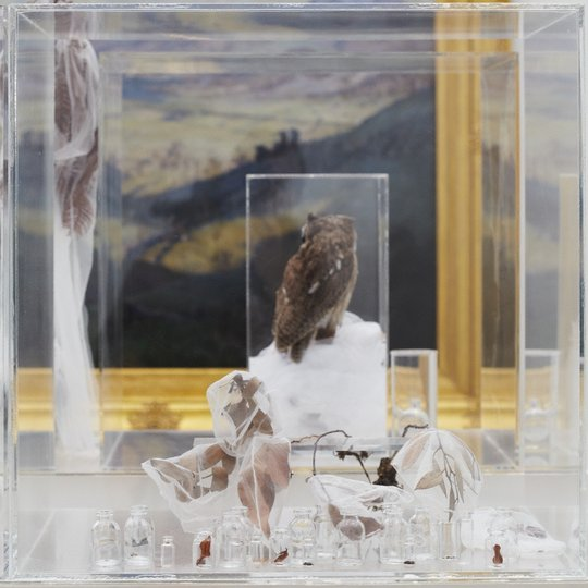 AGNSW collection Janet Laurence The memory of nature (2010) 125.2012.a-cc