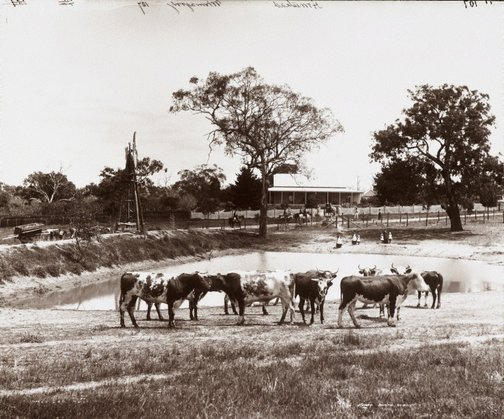 An image of Homestead, Memagong Station by Unknown, Kerry & Co
