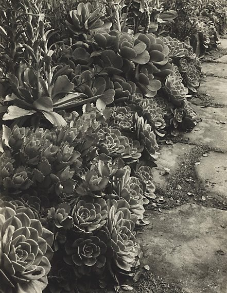 An image of Succulents
