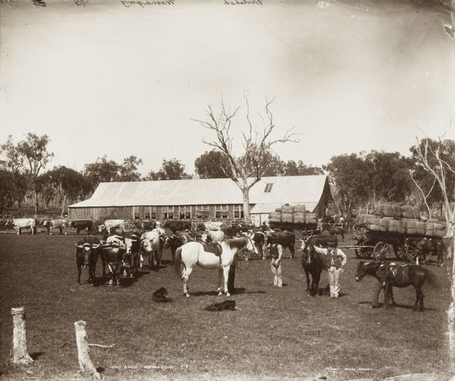An image of Woolshed, Memagong Station