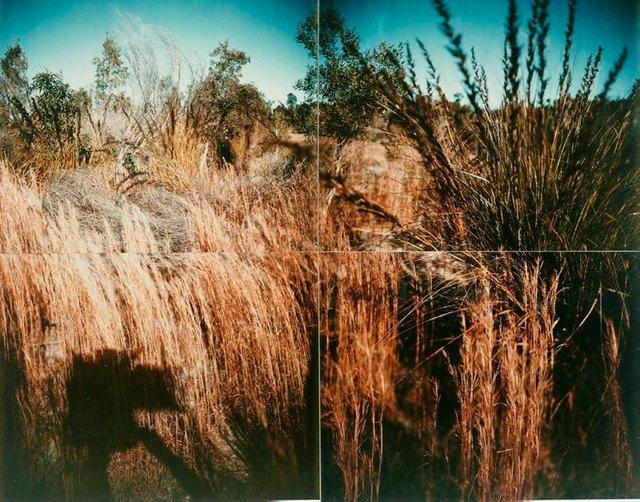 An image of Coastal vegetation near Cape Byron, New South Wales