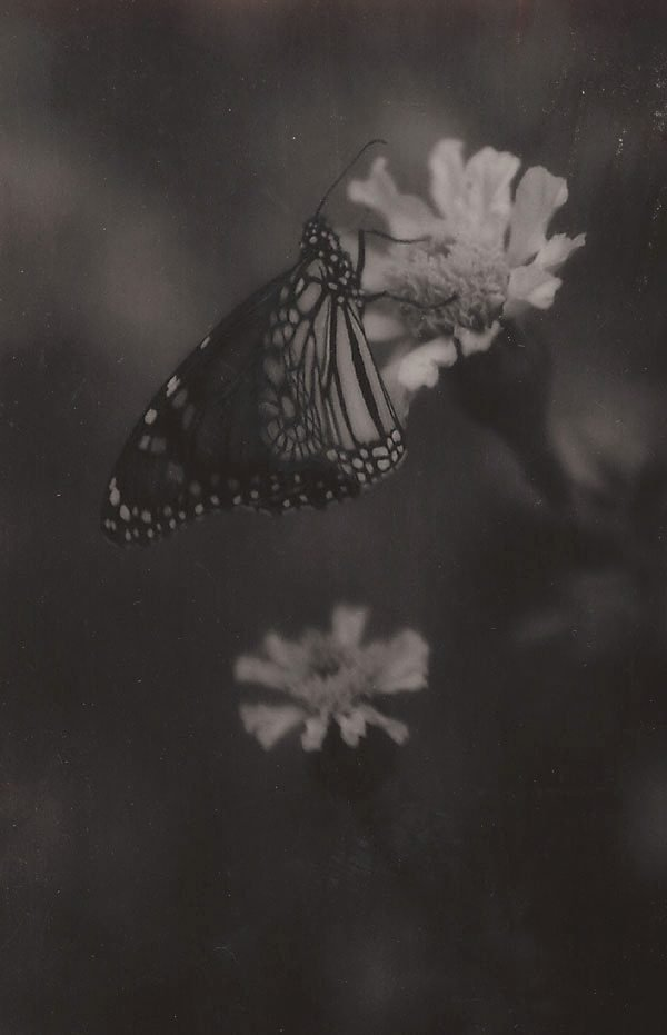 An image of Untitled (butterfly)