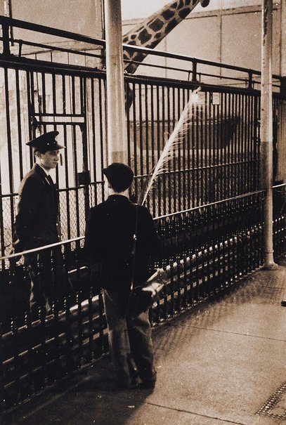 An image of Regent's Park zoo, London by Lewis Morley