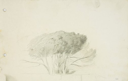 An image of Clump of trees by Lloyd Rees