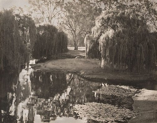 An image of Willows, River Murray by Harold Cazneaux