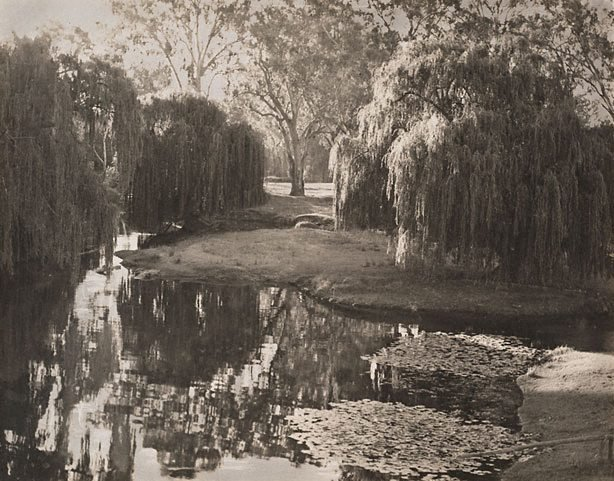 An image of Willows, River Murray