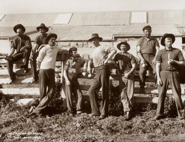 An image of Australian shearers