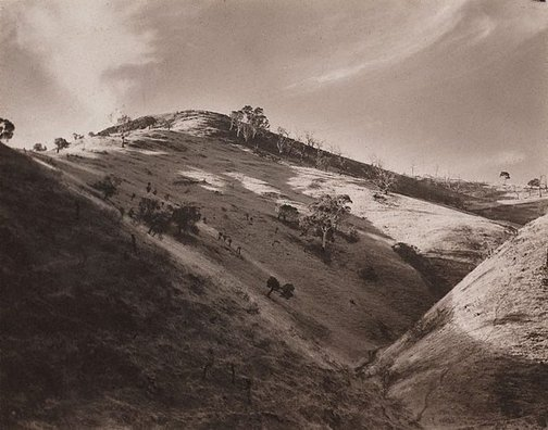 An image of Autumn sunshine, Adelaide Hills by Harold Cazneaux