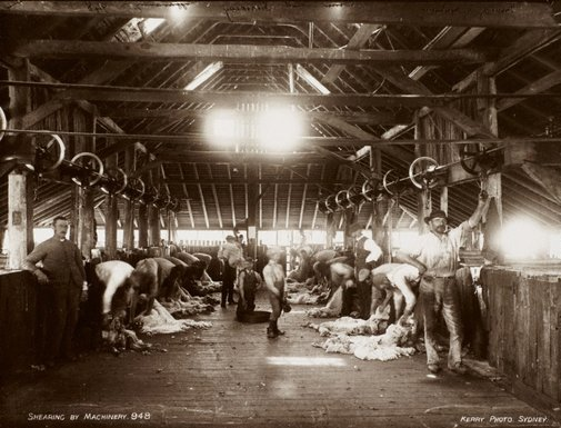 An image of Shearing by machinery by Unknown, Kerry & Co