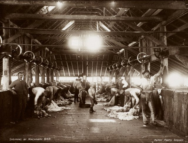 An image of Shearing by machinery