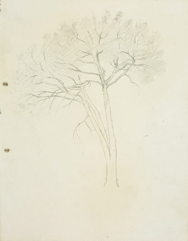 An image of Tree