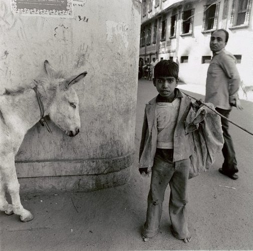 An image of Donkey on pause Bhu7, India by Max Pam