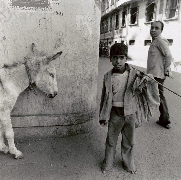 An image of Donkey on pause Bhu7, India