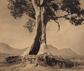 AGNSW collection Harold Cazneaux Spirit of endurance (1937) 134.1975
