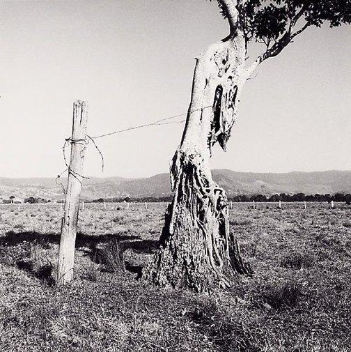 An image of Mullumbimby 1 by Ingeborg Tyssen